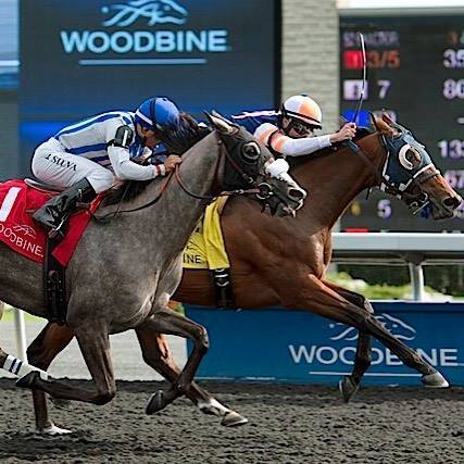 Little Red Feather Racing's Midnight Miley wins the $125,000 La Lorgnette Stakes