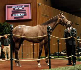 Horse racing partnerships spend millions of dollars at the Keeneland sale