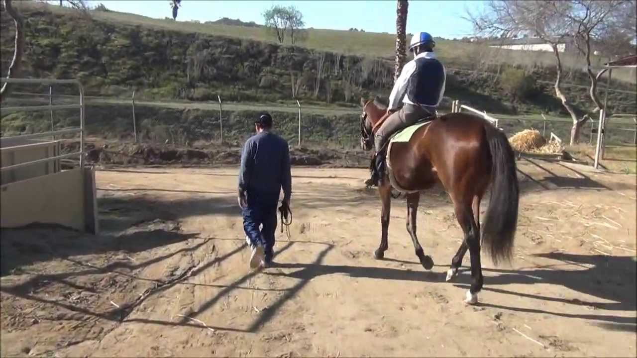 Watch horses train at San Luis Rey Downs
