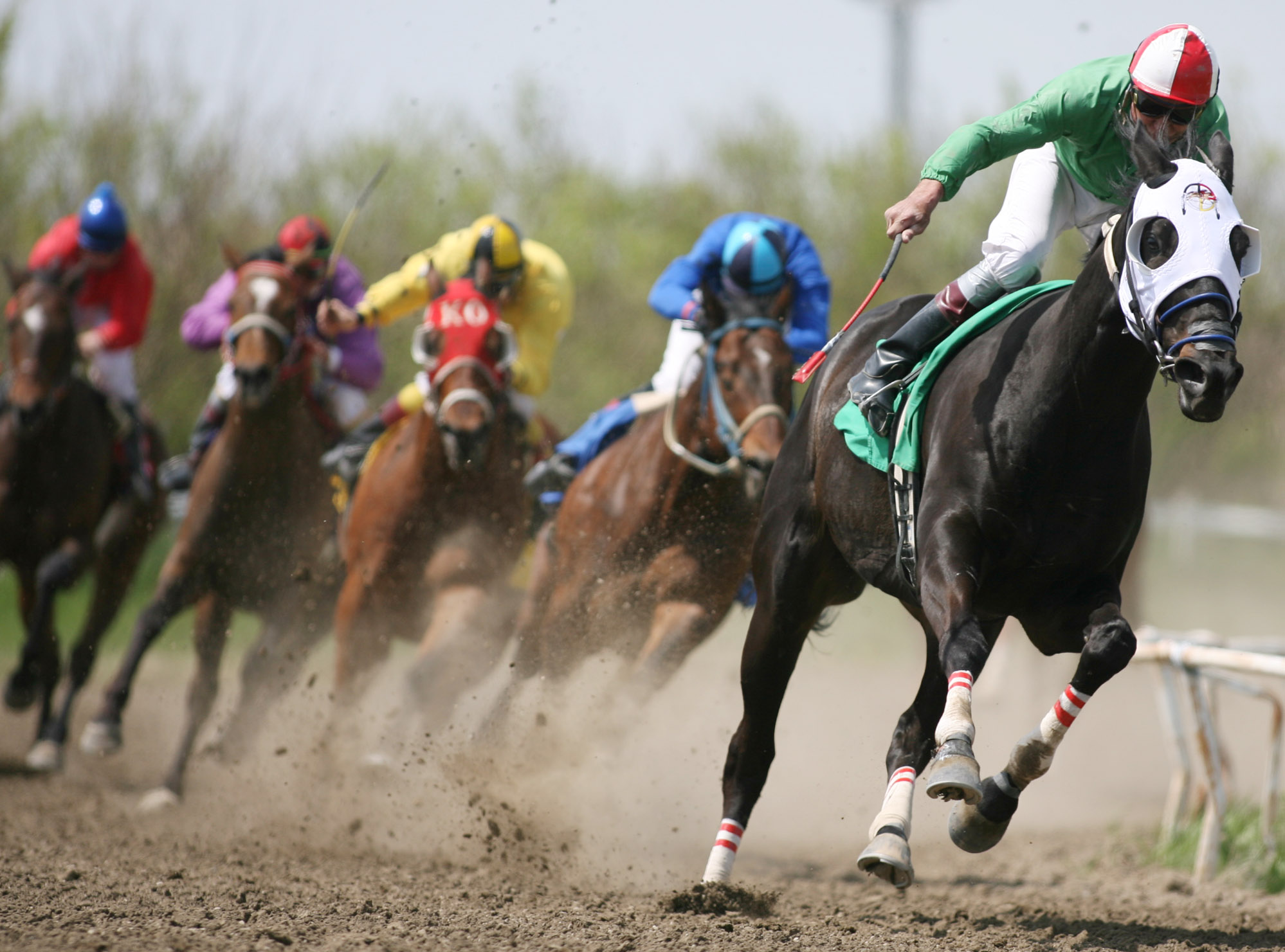 Scams in Horse Racing Partnerships